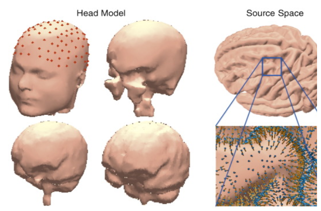 An image illustrating the components of the human head that are taken into account for head modeling purposes.